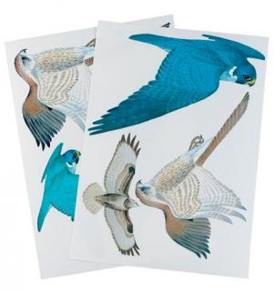 Bird care stickers to help prevent wild birds colliding with glazed windows.