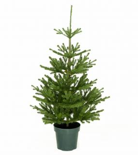 4ft Imperial Spruce Potted Feel-Real Artificial Christmas Tree