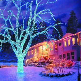 Christmas Tree Lights Hayes Garden World