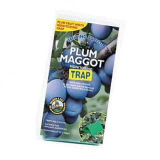 Growing Success Plum Maggot Monitoring Trap refill. The trap uses the pheromone scent of the female moth to attract and trap male moths of the same species. Beneficial insects are not attracted.