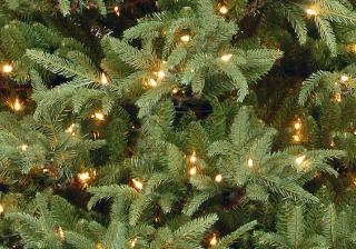 This impressive 8ft slim pre-lit Frasier Grande Fir has a range of technologies for a professional finish. FREE Gift included when you buy online.