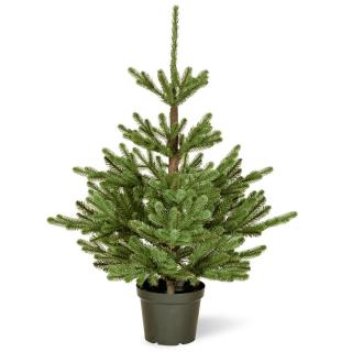 This Feel-Real PE/PVC mix artificial Christmas tree comes ready potted for display.