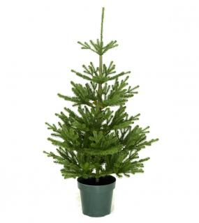 This Feel-Real PE/PVC mix artificial Christmas tree is a great size for a smaller room.