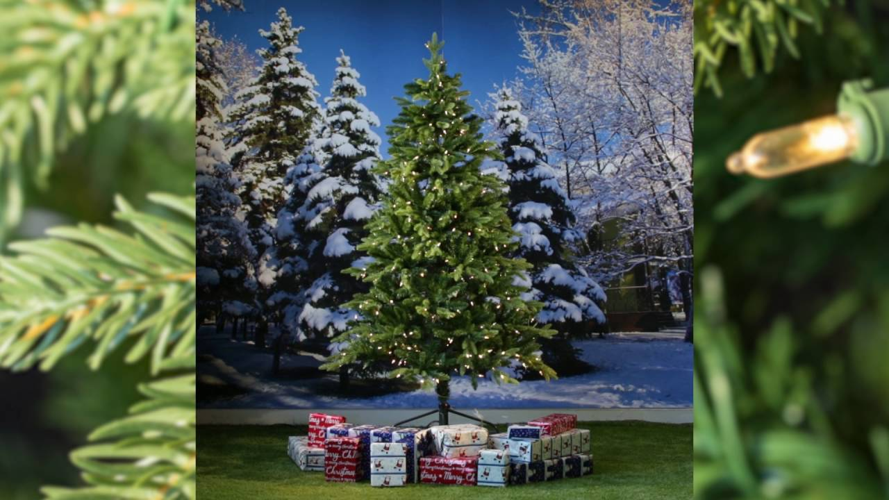 8ft Pre-lit Avalon Spruce Feel-Real Artificial Christmas