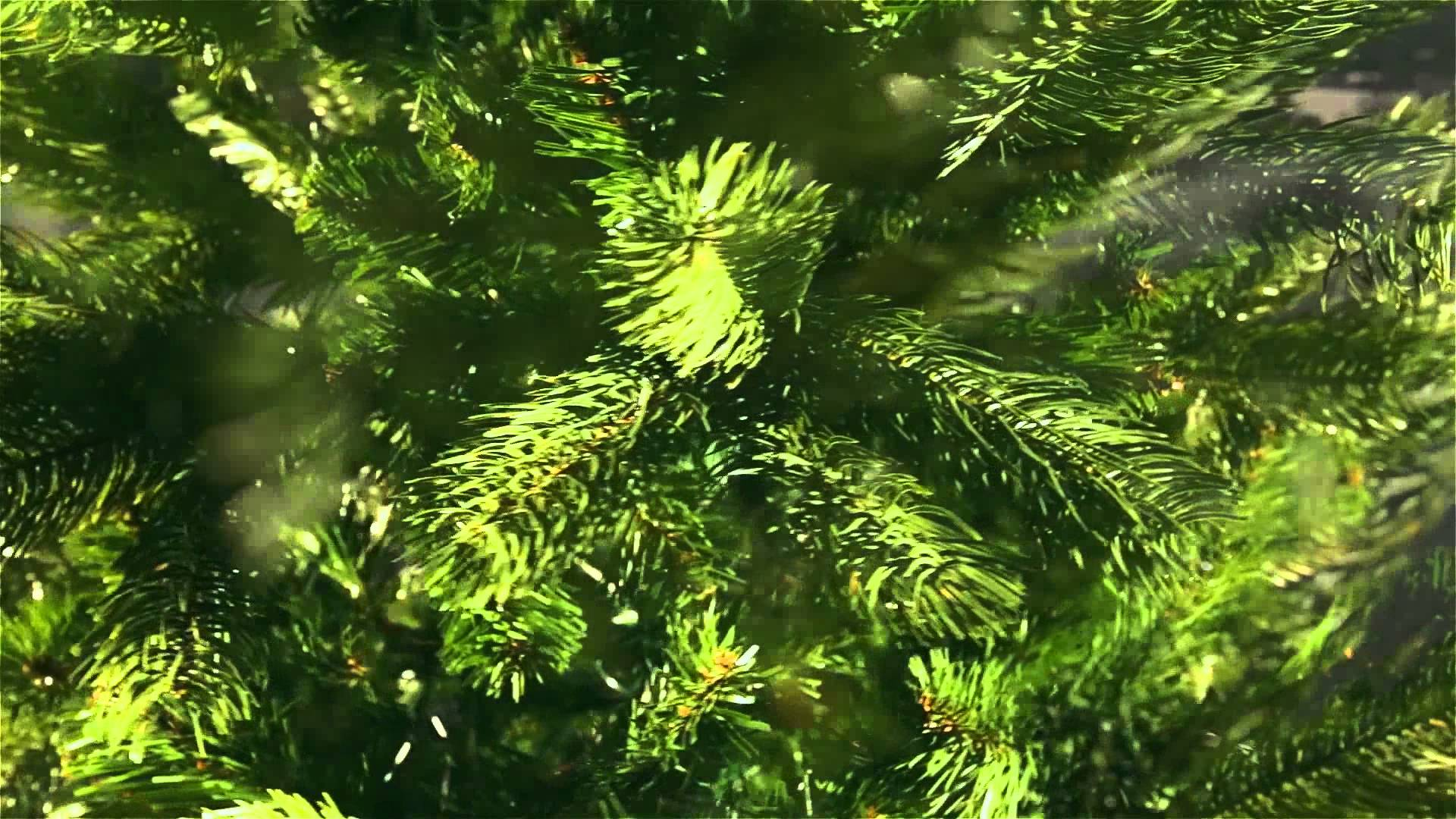 7ft Bayberry Spruce Slim Feel-Real Artificial Christmas